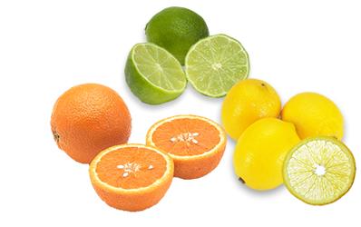 保湿性の高い果汁&エキス類 アルマダ 電子トリートメントシャンプー